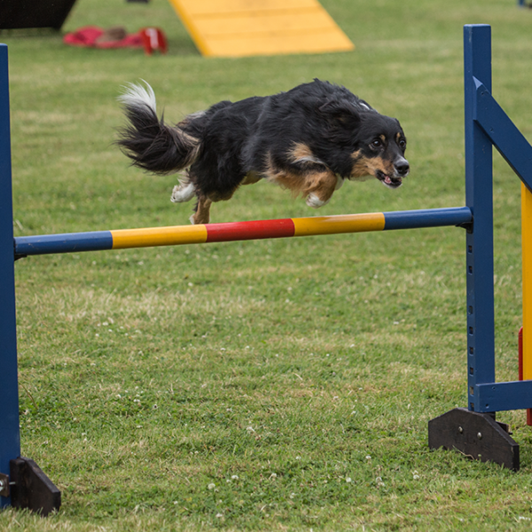 Tunbridge Wells & District Canine Society - Dog Agility - POSTPONED TO 5-6 DECEMBER 2020