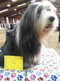 Guildford & District Canine Society - Dog Show